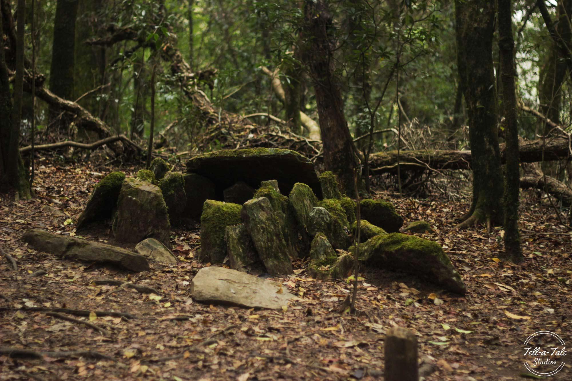 The Sacred Grove - Mawphlang, Meghalaya Mumbai Photography
